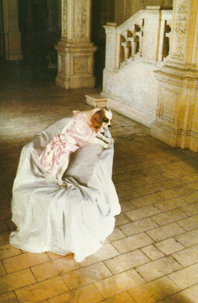 Debruff Turberville is recognized for her hauntingly beautiful photographs of dogs lost in thought in surrealist surroudings from Dogue by Ilene Hochberg (c) Ilene Rosenthal Hockberg 1986