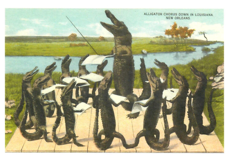 Alligator Chorus Down in Louisiana New Orleans