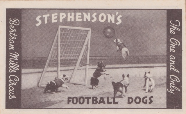 Bertram Mills Circus Dec 17 1948Stephenson's Football Dogs